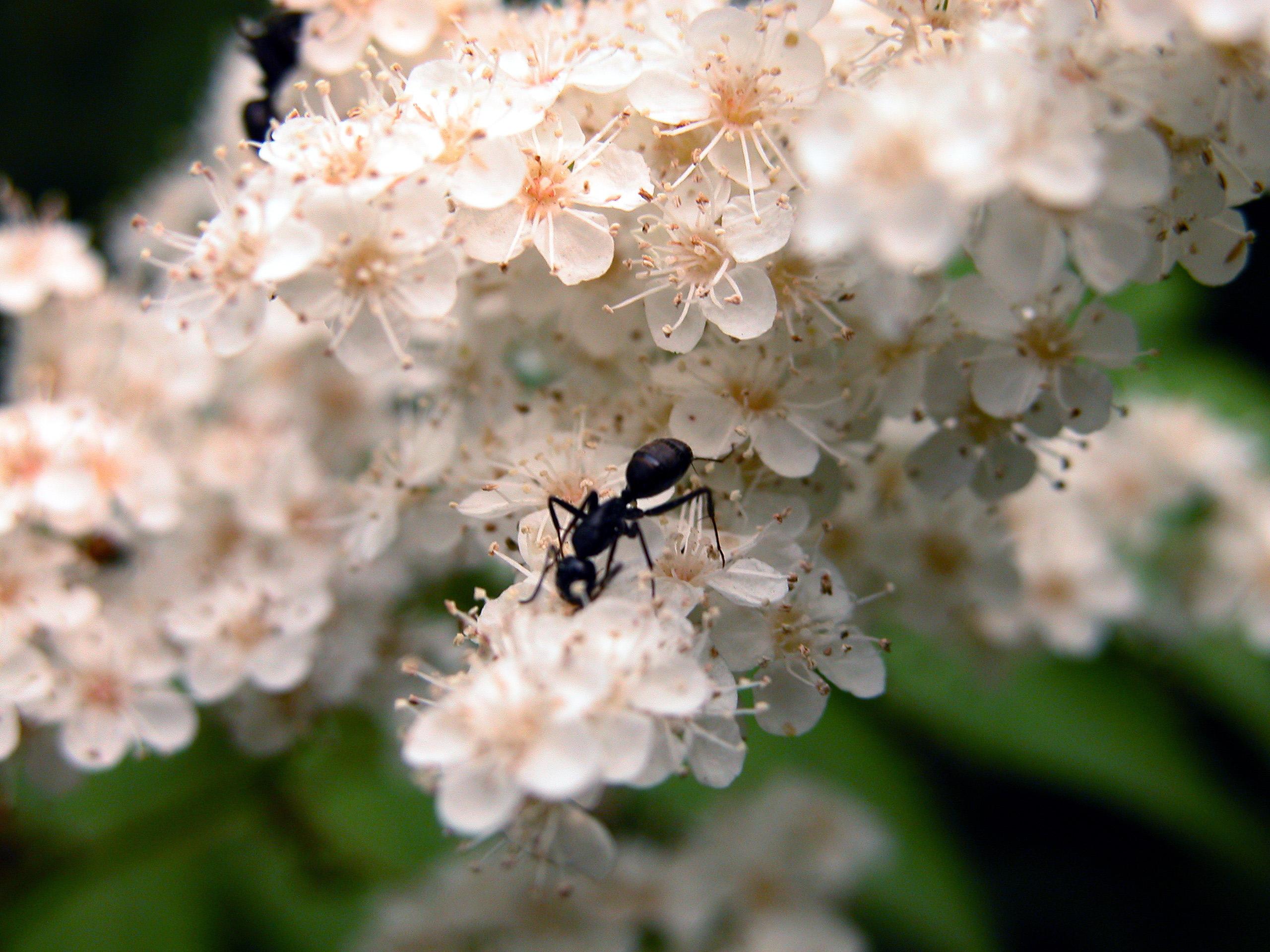 うっとうしい花粉症を改善!~イルチブレインヨガの呼吸・瞑想体験会